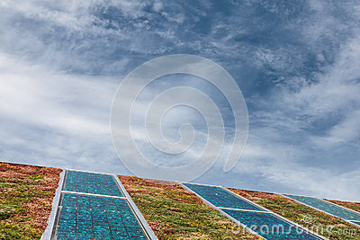 Solar panels on a roof covered with sedum