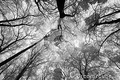 soleil de ciel par les branches darbre dhiver de dessous photo libre de droits image 36873375 - Arbre Ciel