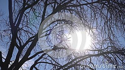 Solens ljus går genom träden arkivfilmer