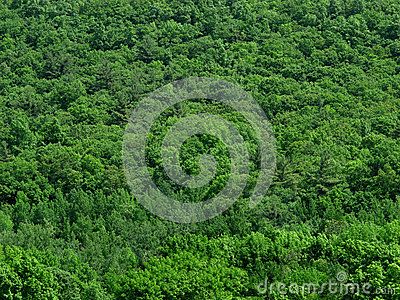Solid Green Treetops Background. Stock Images - Image: 25139634