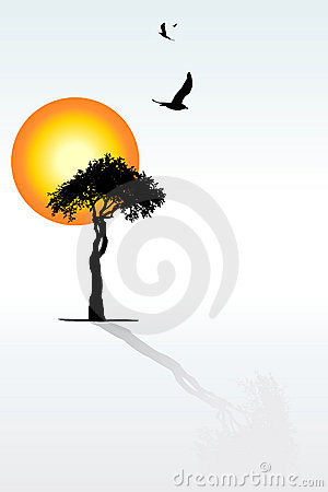 Solitaire tree, shadow, sunset, flying birds