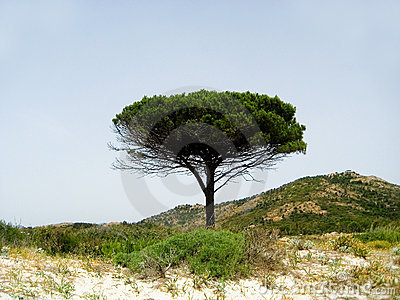 Solitary beach with pine trees, Sardinia, Italy