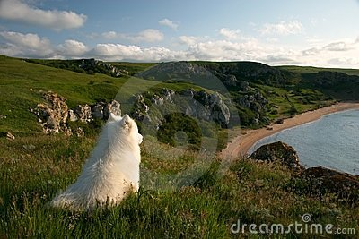 Solitary dog