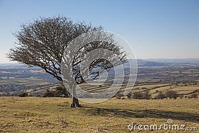 Solitary tree in Dartmoor National Park