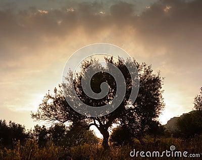Solitary tree at dawn