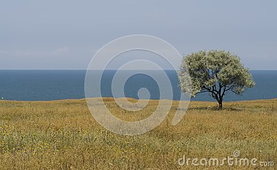 Solitary Tree On Sea Shore Stock Photos - Image: 10277183