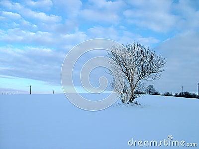 Solitary tree in winter field