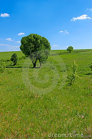 Solitary trees in a meadow