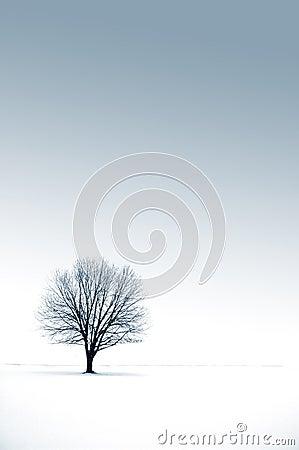 Free Solitude Royalty Free Stock Image - 53346