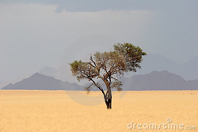 Solitude desert tree