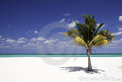 Solitude - White Sand Beach, Palm tree
