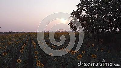 Solnedgång lager videofilmer