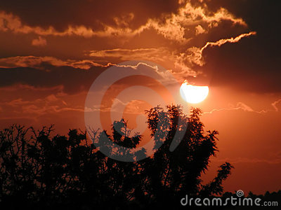 Solnedgångtrees