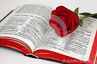 Solomon s Rose