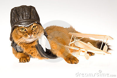 Somali cat wearing pilot outfit