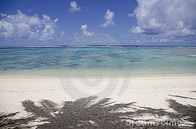 Sombra das palmeiras na praia tropical