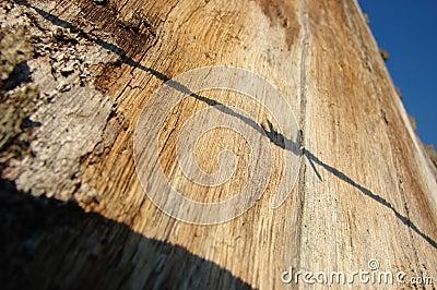 Sombra en árbol