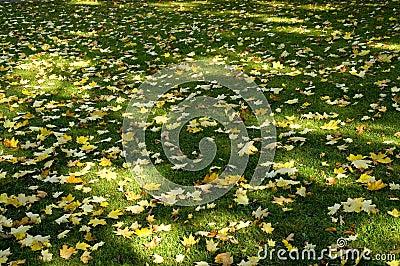 Sombra y hojas 02 de Sun