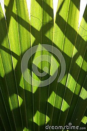 Sombras en hojas de palma verdes