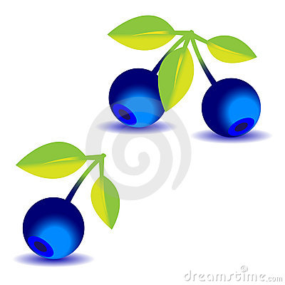 Some blueberries with a leaves