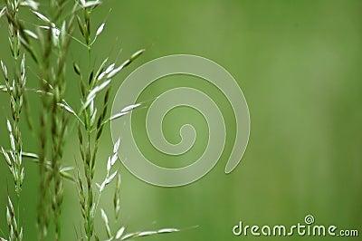 Some grass blades