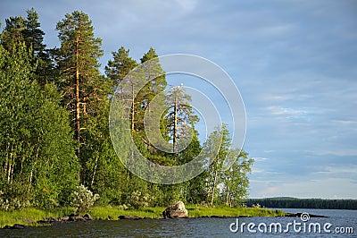 Some gulls on dead pine tree near lake
