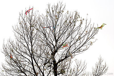 Some kites on a bald tree