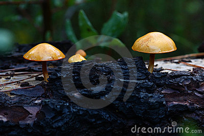 Some mushrooms on tree
