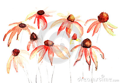 Sommerblumen, Aquarellblumen