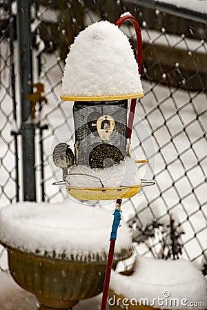 Free Song Sparrow On Bird Feeder In Winter Royalty Free Stock Photos - 83712418