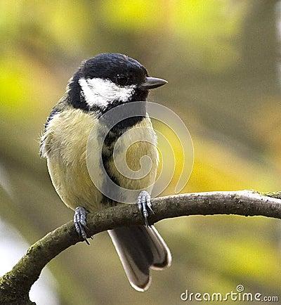 Songbird on branch