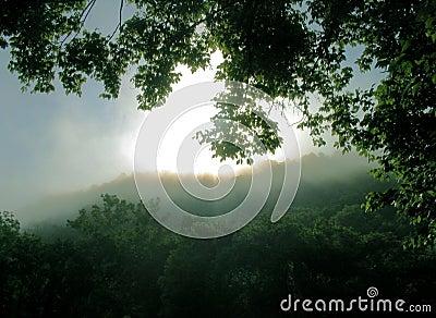 Sonhos solares