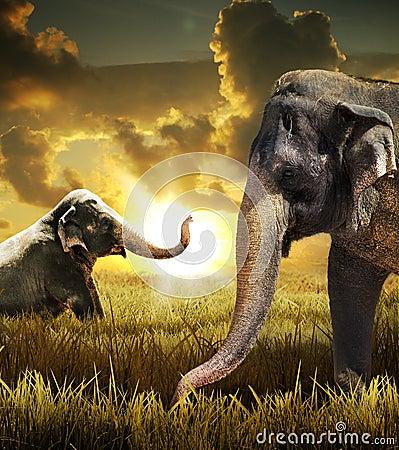 Słonie