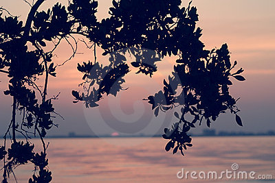 Sonnenaufgang bei Sanibel