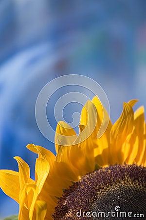 Sonnenblume auf Blau