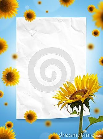 Sonnenblumen und Papierfeld