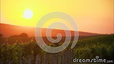 Sonnenuntergang auf einem Weinberg in Frankreich stock video footage