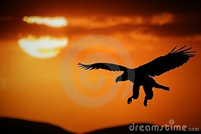 Sonnenuntergangadler