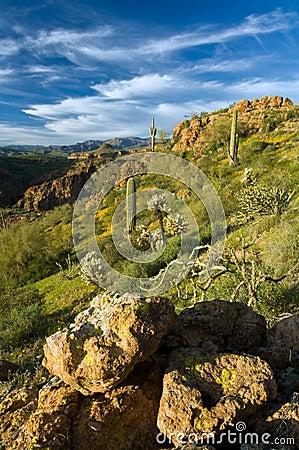 Free Sonoran Desert In Bloom Royalty Free Stock Photos - 4961838