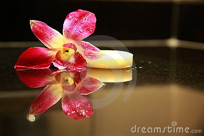 Sopa and orchid