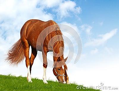 Sorrel foal - realistic photomontage