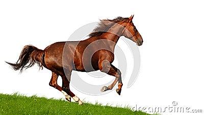 Sorrel mare