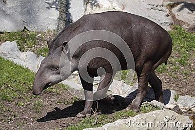 south america donkey porn