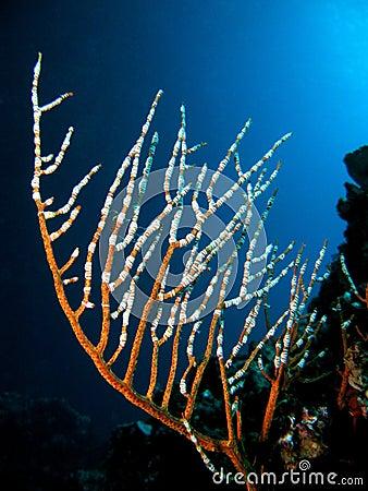 South andaman corals