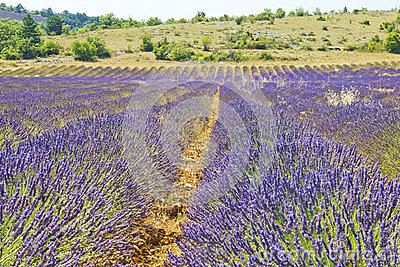 South of France, Provence