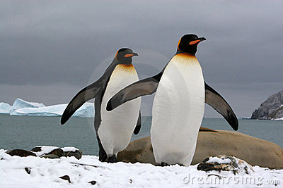 South Georgia (Antarctic)