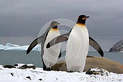 South Georgia (Antarctic)