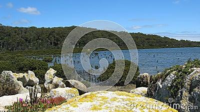 Southern Australian Coastline
