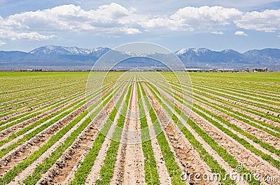 Southern California Farm