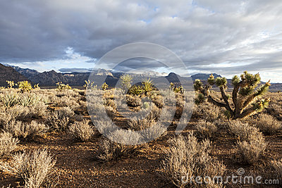 Southern Nevada Mojave Desert Morning